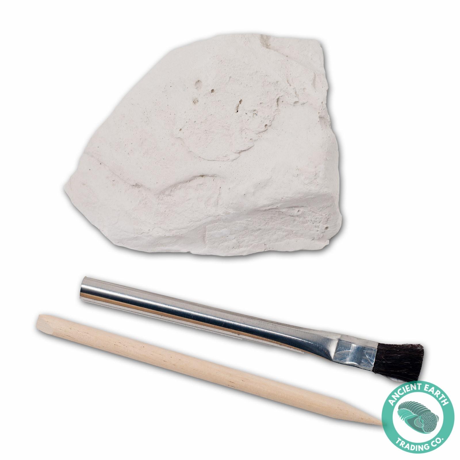 brachiopod shell fossil preparation dig kit