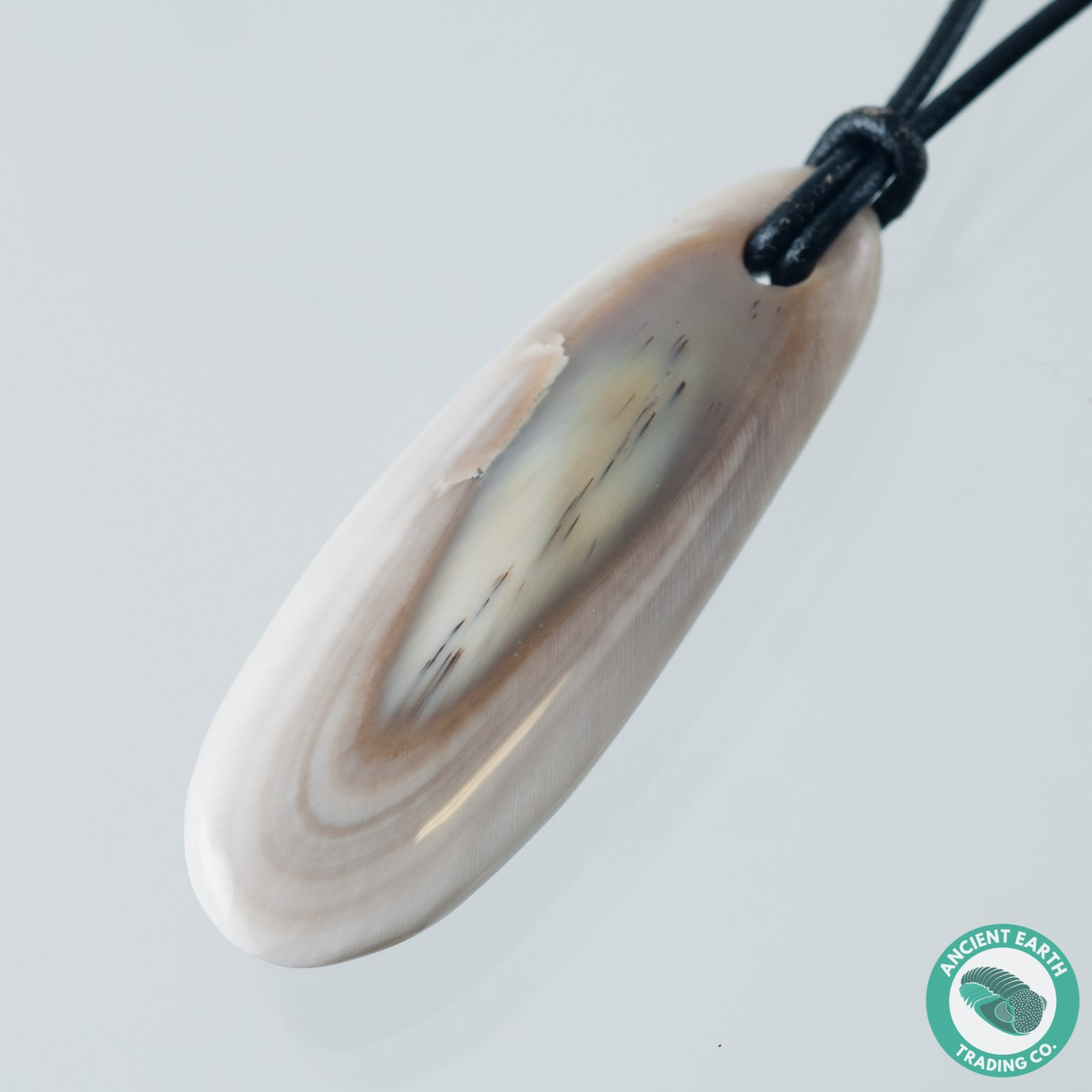 1.71 inch Sea Cow Fossil Tooth Pendant - Desmostylus from California