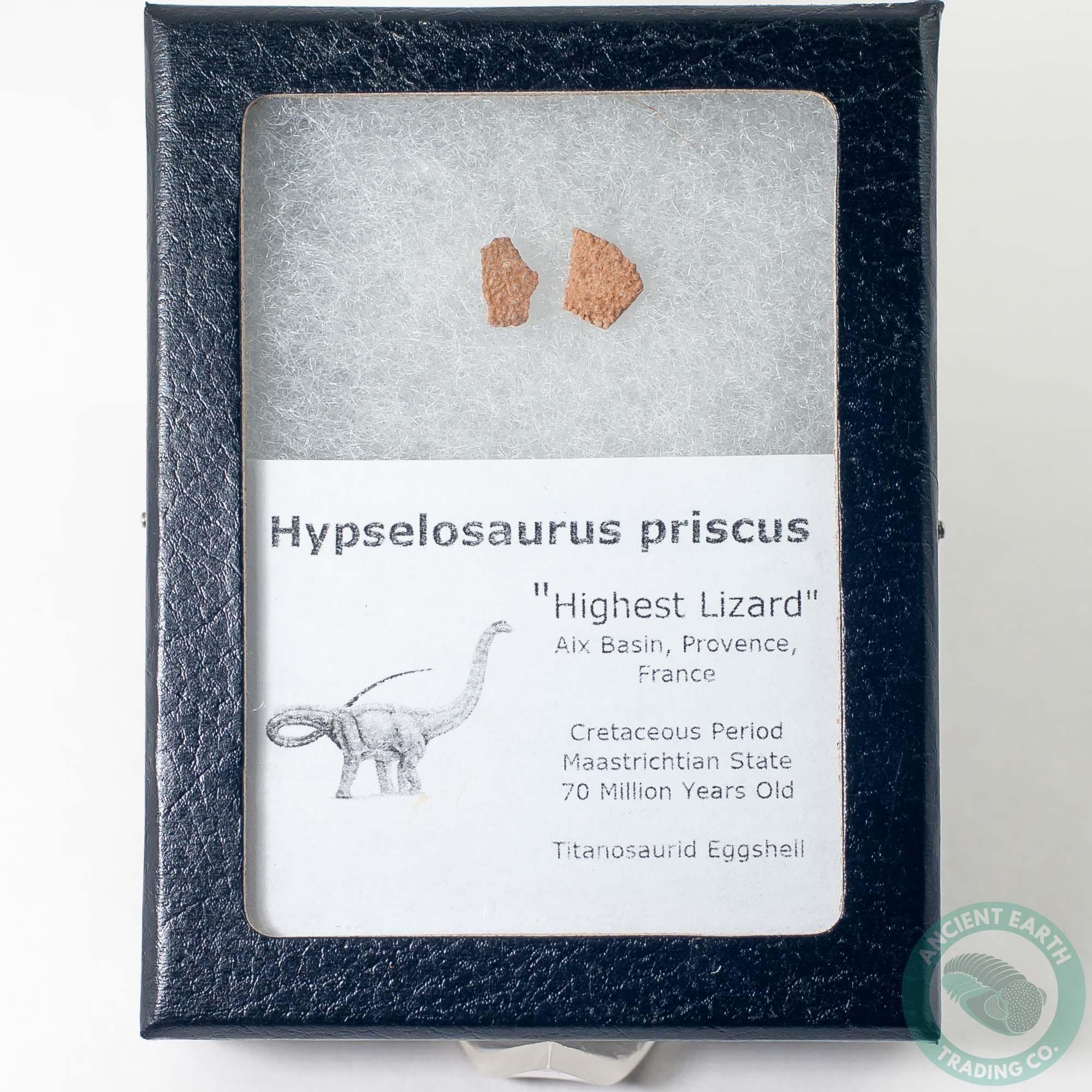 Hypselosaurus Titanosaur Dinosaur Egg Shell Fossil 4 - France