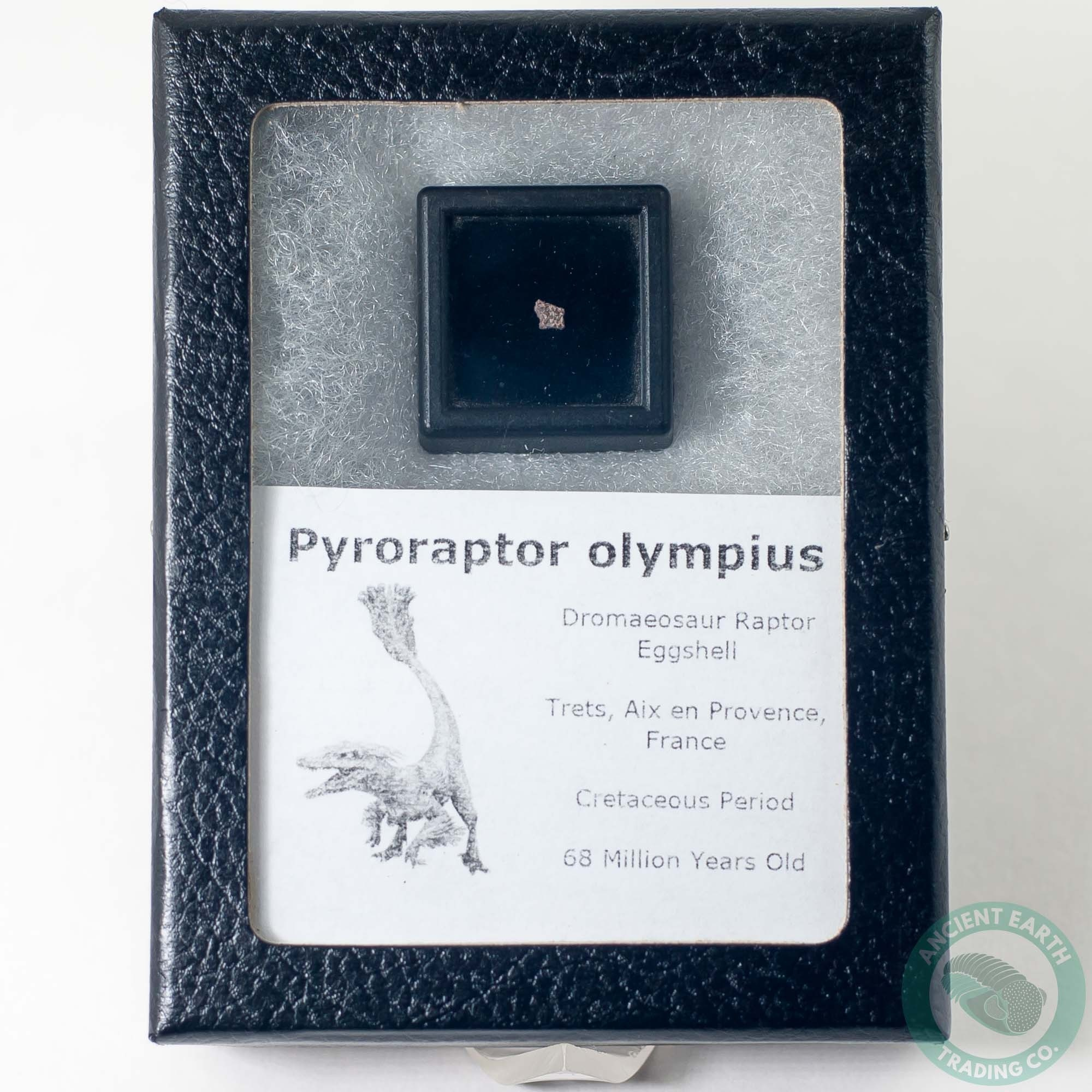 Pyroraptor Dromaeosaur Raptor Dinosaur Egg Shell Fossil 2 - France