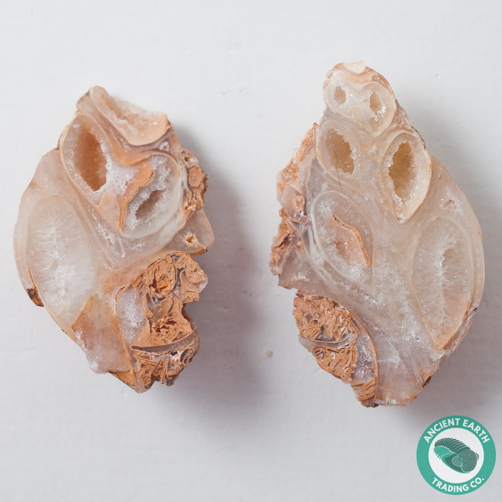 2.07 in Polished Agate Split Pair Gastropod from Western Sahara