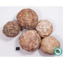 "3-4"" Unbroken Quartz Crystal Geode - Morocco - 3 Pack"
