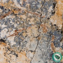 Giant Plate Pipefish Seahorse Fossil Mass Mortality Plate - New Locality - California