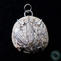 1.44 in Polished Fossil Sand Dollar Silver Pendant from California