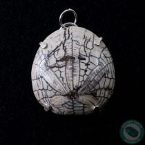 1.41 in Polished Fossil Sand Dollar Silver Pendant from California