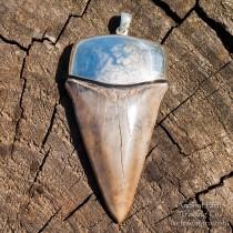 Large Tan Fossil Mako Shark (Isurus hastalis) Silver Pendant from South Carolina