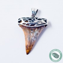 38 mm Fossil Shark Tooth (Carcharodon hastalis) Silver Pendant from Sharktooth Hill, California