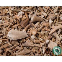 Bulk Fossil Shark Teeth Bones & More - 1 Pound - Morocco