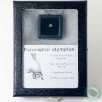 Pyroraptor Dromaeosaur Raptor Dinosaur Egg Shell Fossil 4 - France