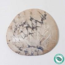 1.73 in Polished Sand Dollar Fossil Dendraster gibbsii - California
