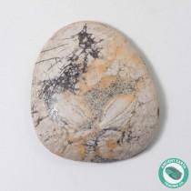 1.69 in Polished Fossil Sand Dollar Dendraster gibbsii - California