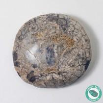 1.93 in Polished Sand Dollar Fossil Dendraster gibbsii - California