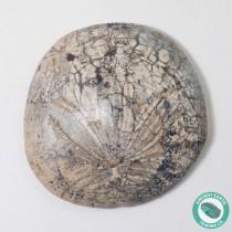 2.05 in Polished Sand Dollar Fossil Dendraster gibbsii - California