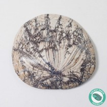 2.2 in Polished Fossil Sand Dollar Dendraster gibbsii - California