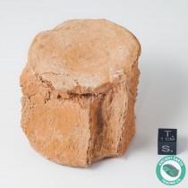 2.47 in. Plesiosaur Zarafasaura Vertebra Backbone Fossil - Morocco