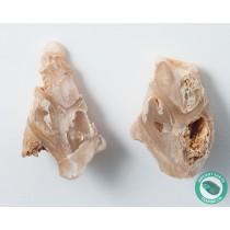 1.63 in Polished Agate Split Pair Sea Snail Gastropod from Western Sahara
