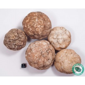 "3-4"" Unbroken Quartz Crystal Geode - Morocco - 10 Pack"