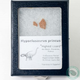 Hypselosaurus Titanosaur Dinosaur Egg Shell Fossil 2 - France