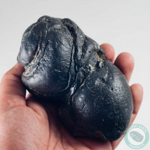 Giant Megalodon Shark Coprolite Fossil - South Carolina