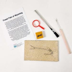 Small Fossil Fish Preparation Dig Kit Grade A - Wyoming
