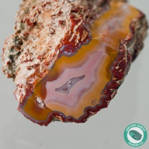 2.25 in. Large Yellow Cat Petrified Wood Pink Agate Limb - Utah