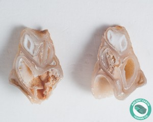 1.34 in Polished Agate Split Pair Gastropod from Western Sahara