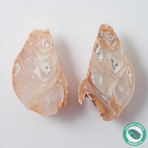 2.11 in Polished Agate Split Pair Gastropod from Western Sahara