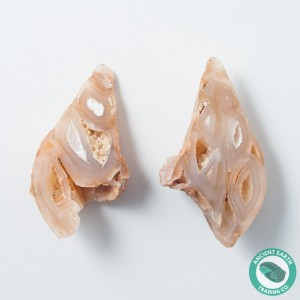 2 in Polished Agate Split Pair Gastropod from Western Sahara
