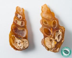 2.7 in Carnelian Agate Split Pair Sea Snail Gastropod from Western Sahara