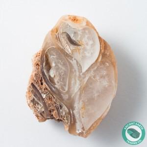 1.78 in Polished Agate Split Pair Sea Snail Gastropod from Western Sahara